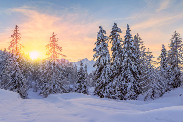 Trees covered with hoarfrost and snow in mountains Stock photo © Fesus