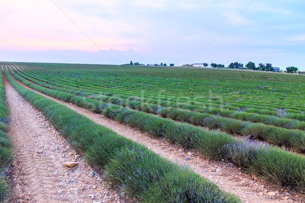 ストックフォト: ラベンダー畑 · 収穫 · 空 · 花 · 日没 · 風景