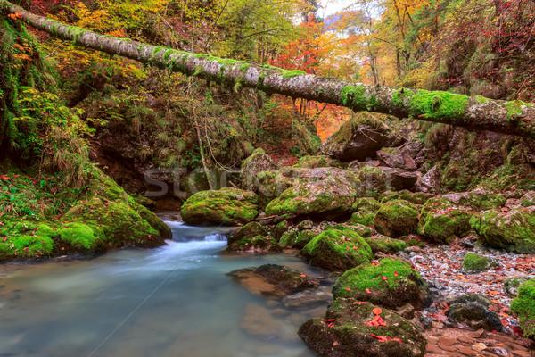 ручей глубокий горные лес воды древесины Сток-фото © Fesus