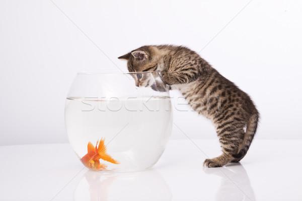 Photo stock: Maison · chat · or · poissons · eau · verre