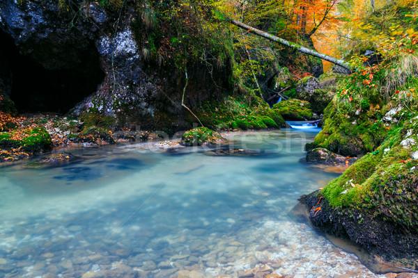 Creek deep in mountain forest in Transylvania Stock photo © Fesus