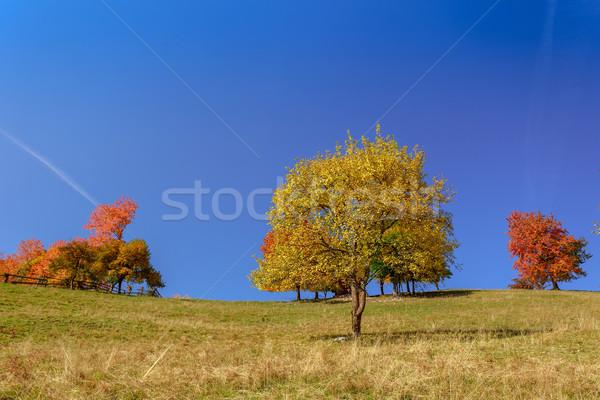 Autumn landscape Stock photo © Fesus
