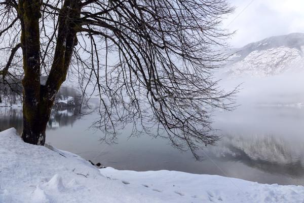 зима озеро парка долины пейзаж снега Сток-фото © Fesus
