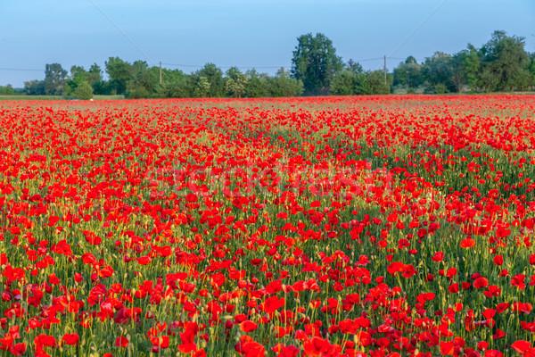 области луговой лет Венгрия весны Сток-фото © Fesus
