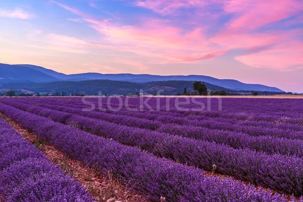 Сток-фото: красивой · пейзаж · закат · небе · цветок