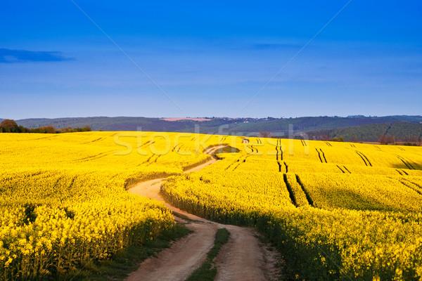 Weg Vergewaltigung Bereich Himmel Sonne Schönheit Stock foto © Fesus