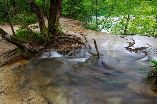 Primavera forestales arroyo parque Croacia paisaje Foto stock © Fesus