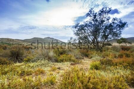 Tree near sand dunes in the desert, Spain, Andalusia, Almeria Stock photo © Fesus