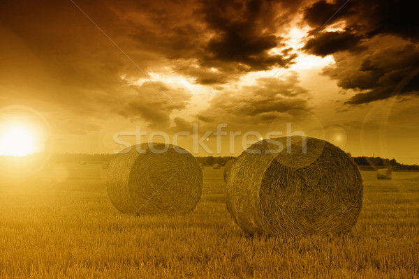 End of day over field with hay bale Stock photo © Fesus
