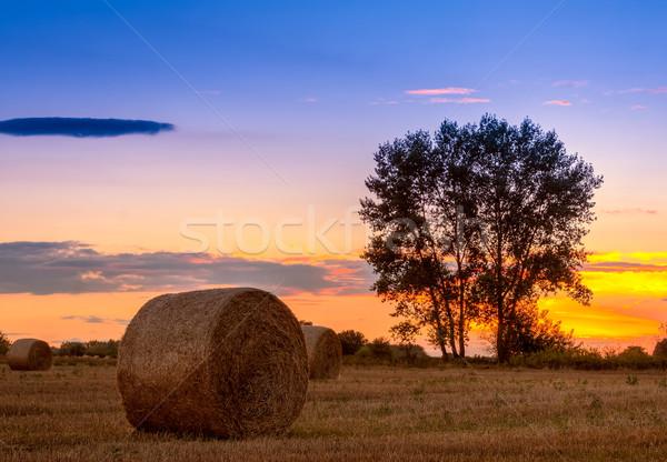 Naplemente mező fa széna bála Magyarország Stock fotó © Fesus