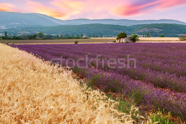 Сток-фото: красивой · пейзаж · закат · лаванды · пшеницы