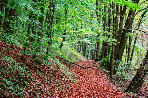 ösvény ősz erdő Magyarország fa út Stock fotó © Fesus