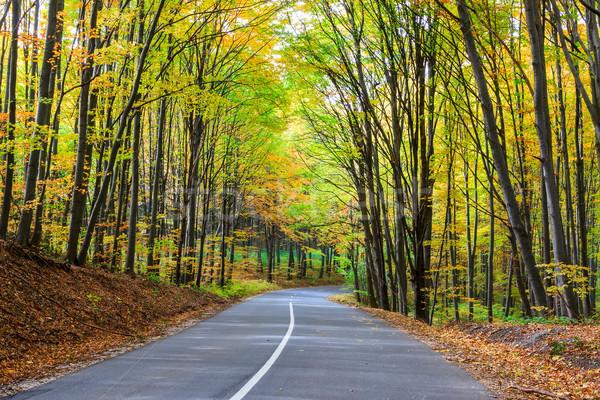 дороги осень лес пейзаж Венгрия древесины Сток-фото © Fesus