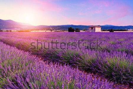 Beautiful landscape of lavender fields at sunset near Sault Stock photo © Fesus