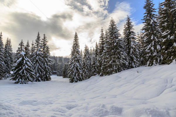 Invierno forestales Eslovenia Europa árbol madera Foto stock © Fesus