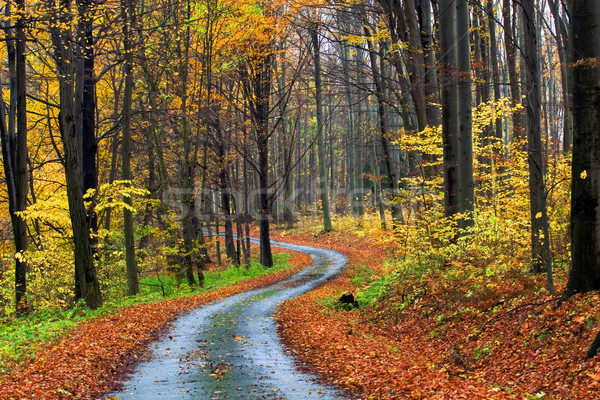 осень сцена лес природы фон ходьбе Сток-фото © Fesus