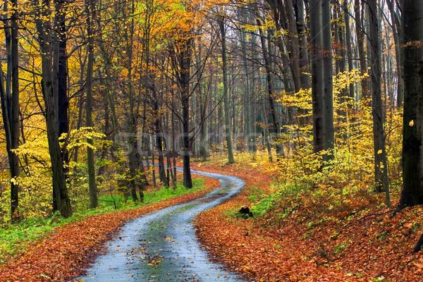 Jesienią scena lasu charakter tle spaceru Zdjęcia stock © Fesus
