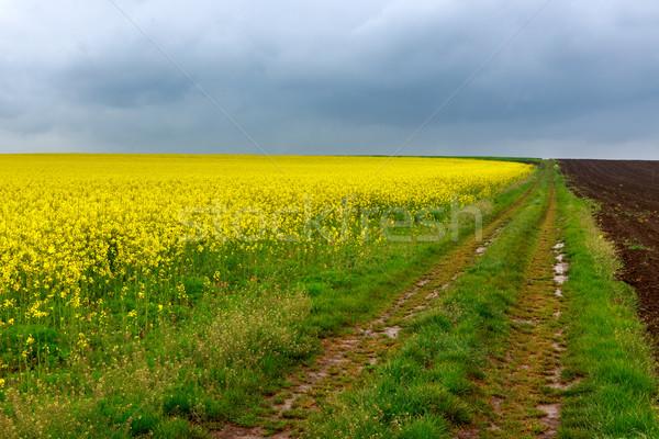 Toprak yol alanları Macaristan gökyüzü bahar yol Stok fotoğraf © Fesus