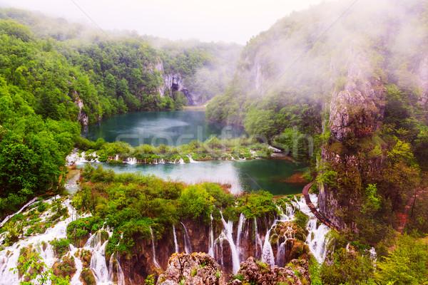 雨の 日 公園 水 葉 山 ストックフォト © Fesus
