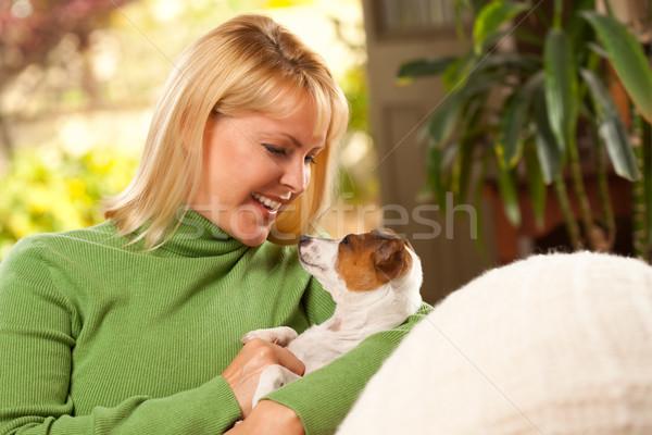 女性 子犬 日 ソファ ジャックラッセルテリア ストックフォト © feverpitch
