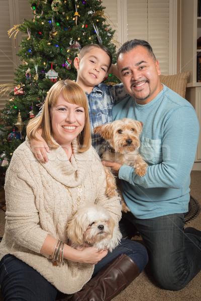 Foto stock: Jovem · família · árvore · de · natal · feliz · filhotes · de · cachorro