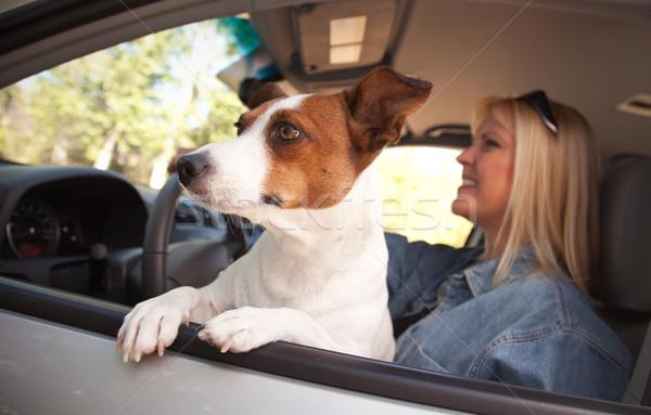 ジャックラッセルテリア 車 犬 女性 休暇 ストックフォト © feverpitch