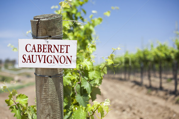 Cabernet Sauvignon Sign On Vineyard Post Stock photo © feverpitch