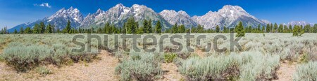 Pano of The Grand Teton National Park Mountain Range in Wyoming, Stock photo © feverpitch