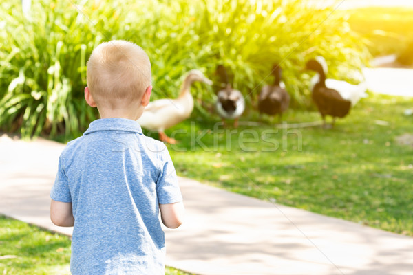 Curious Young Boy Watching The Ducks At The Park Stock photo © feverpitch