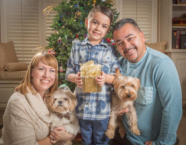 Stockfoto: Jonge · halfbloed · familie · kerstboom · gelukkig · puppies