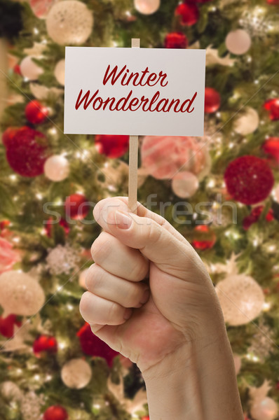 Hand Holding Winter Wonderland Card In Front of Decorated Christ Stock photo © feverpitch
