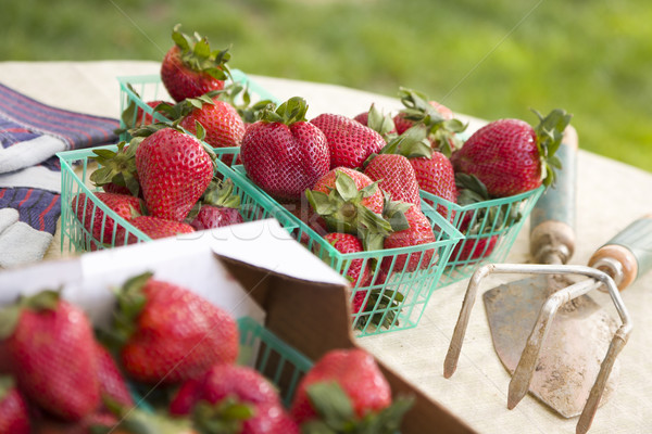 Baskets of Fresh Strawberries Stock photo © feverpitch
