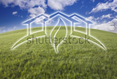 Sunflower, Green House Ghosted Over Fresh Grass and Sky Stock photo © feverpitch