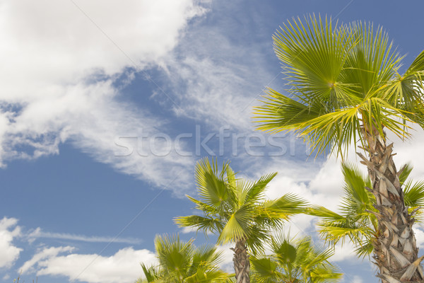 Majestueux tropicales palmiers ciel bleu nuages belle Photo stock © feverpitch