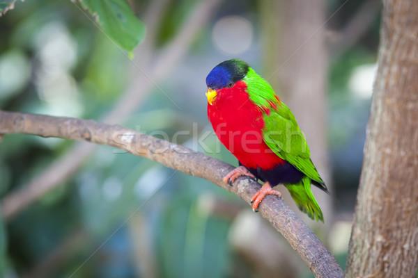 Fiji ramo amor natureza pássaro Foto stock © feverpitch