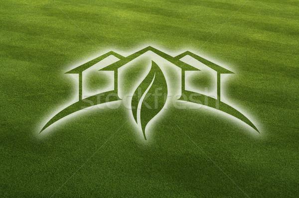 теплица свежие Cut трава лист травой поле Сток-фото © feverpitch