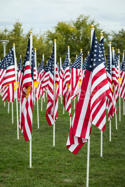 Field of Veterans Day American Flags Waving in the Breeze. Stock photo © feverpitch