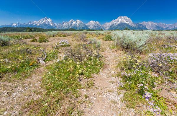 Parque montana EE.UU. agua naturaleza Foto stock © feverpitch