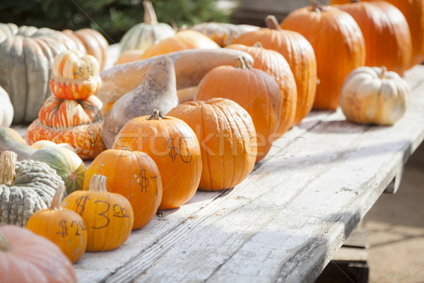 Fresh Orange Pumpkins and Hay in Rustic Fall Setting Stock photo © feverpitch