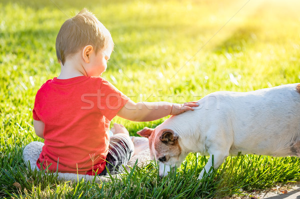 Cute Baby Boy Sitting In Grass Petting Dog Stock photo © feverpitch