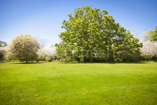 Hermosa hierba verde campo árboles grande Foto stock © feverpitch