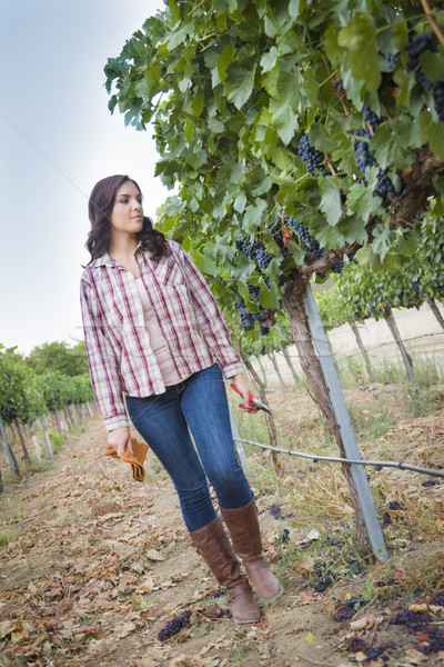 Young Female Farmer Inspecting the Grapes in Vineyard Stock photo © feverpitch