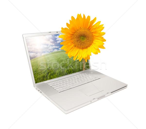 Foto stock: Plata · ordenador · portátil · aislado · girasol · amarillo