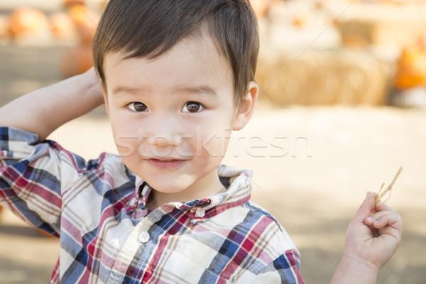 Abóbora bonitinho Foto stock © feverpitch