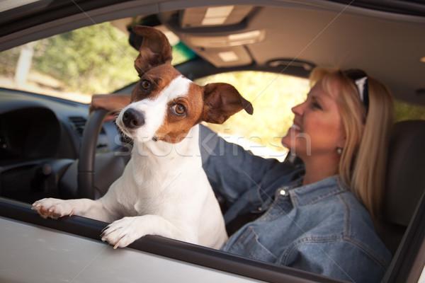 Jack russell terrier élvezi autó kutya női vakáció Stock fotó © feverpitch