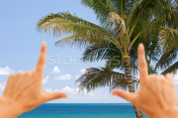 Hands Framing Palm Trees and Tropical Waters Stock photo © feverpitch