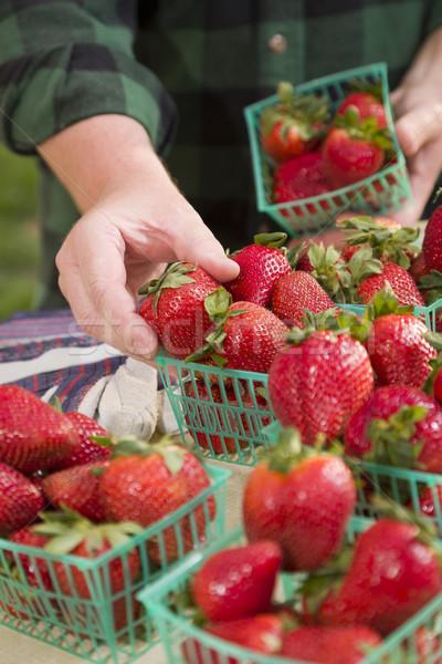 Gazda gyűlés friss eprek piros kezek Stock fotó © feverpitch