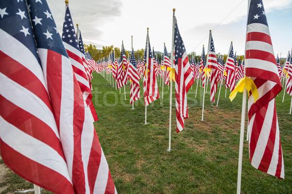 Mező nap amerikai zászlók integet szellő Stock fotó © feverpitch