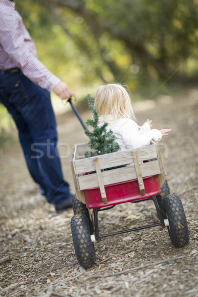 Father Pulls Baby Girl in Wagon with Christmas Tree Stock photo © feverpitch