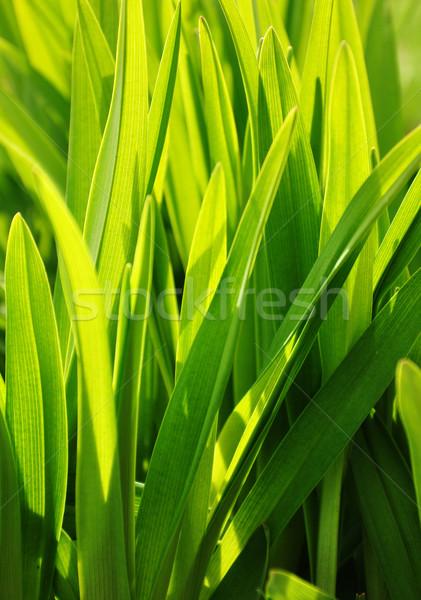 green background Stock photo © FidaOlga